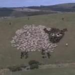 walyou-post-roundup-15-led-light-sheep