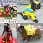 walyou-post-roundup-20-pet-festival