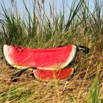 watermelon-bag-design-4