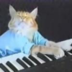 music-keyboard-cat