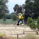 real-bumblebee-transformer1