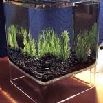 mac-cube-fish-tank
