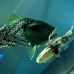 robotic fish pollution solution
