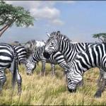 free ps3 dynamic theme afrika