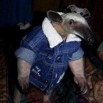 funny anteater