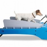 pet dog treadmill