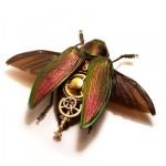 Beetle Buprestidae
