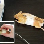 Stuffed Mouse Computer Mouse