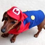 mario puppy costume cute