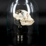Departed – Vervet Monkey Skull-1