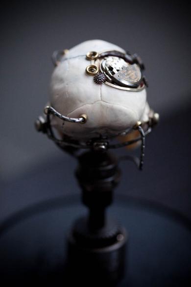 Departed - Vervet Monkey Skull