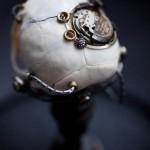 Departed – Vervet Monkey Skull-3