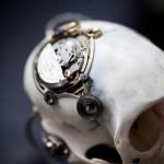 Departed - Vervet Monkey Skull-4