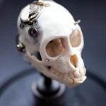 Departed – Vervet Monkey Skull-5