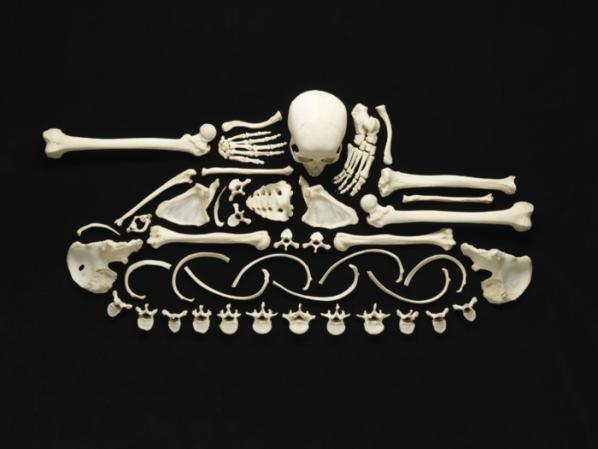 Real Skeleton Art