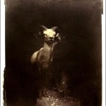 deer photo2