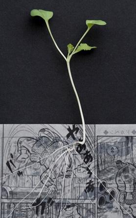 manga comics vegetables farming 5