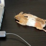 5 mouse mouse