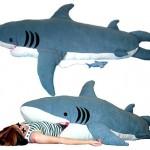 ChumBuddy sleep inside a shark