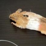 mouse mouse mod image thumb