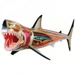 3d great white shark anatomy design image