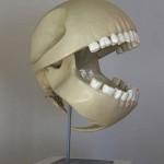 pacman skull anatomy image