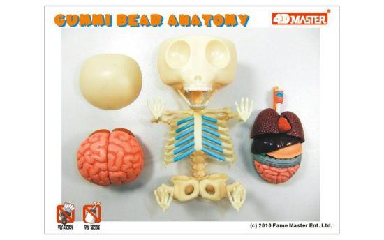 Anatomy Gets Tastier: Gummi Bear Skeletons | Walyou