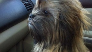star wars chewbacca riding shotgun