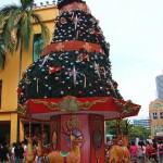 beautiful christmas trees 15