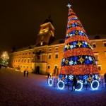 beautiful christmas trees 6