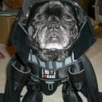 Star_Wars_Animals_in_Costumes_1