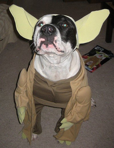 Star_Wars_Animals_in_Costumes_10