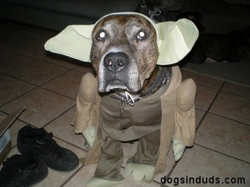 Star_Wars_Animals_in_Costumes_11