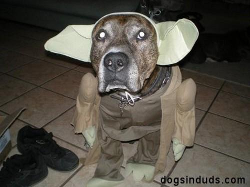 Star_Wars_Animals_in_Costumes_11