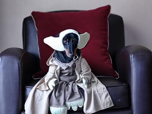 Star_Wars_Animals_in_Costumes_12