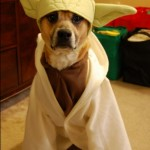 Star_Wars_Animals_in_Costumes_13