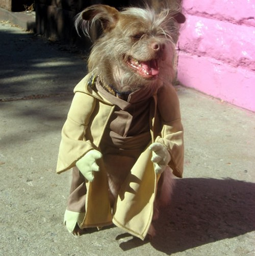 Star_Wars_Animals_in_Costumes_14