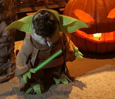 Star_Wars_Animals_in_Costumes_15