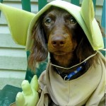 Star_Wars_Animals_in_Costumes_16