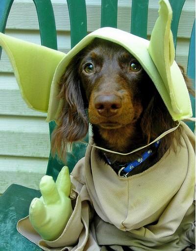 Star_Wars_Animals_in_Costumes_16