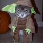 Star_Wars_Animals_in_Costumes_17