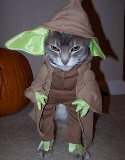 Star_Wars_Animals_in_Costumes_17