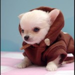 Star_Wars_Animals_in_Costumes_18
