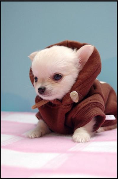 Star_Wars_Animals_in_Costumes_18