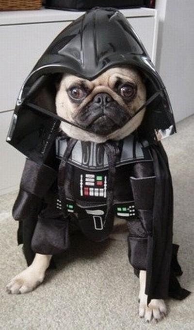Star_Wars_Animals_in_Costumes_2