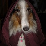 Star_Wars_Animals_in_Costumes_20