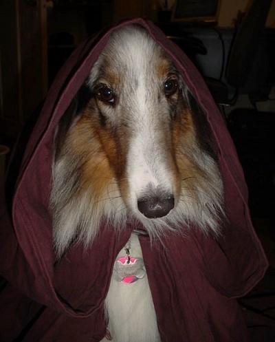 Star_Wars_Animals_in_Costumes_20