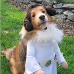 Star_Wars_Animals_in_Costumes_21