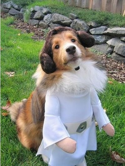 Star_Wars_Animals_in_Costumes_21