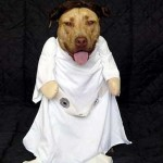 Star_Wars_Animals_in_Costumes_22